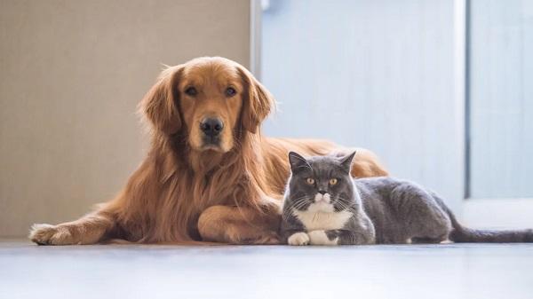 Woofland - Γιατί ο σκύλος μου μισεί τις γάτες