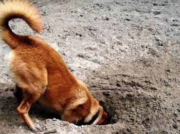 Γιατί ο σκύλος μου σκάβει – Woofland