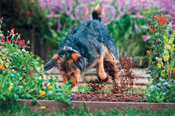 Woofland Γιατί ο σκύλος μου σκάβει.jpgΙΝΤΡΟ