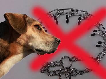 Γιατί όχι στην εκπαίδευση σκύλου με κολάρα prong – Woofland