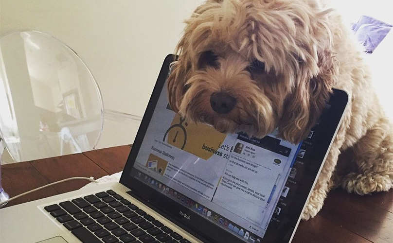 Woofland - Γουφαμάρες - Αστείες φωτογραφίες σκύλων - Όταν ο σκύλος δεν μας αφήνει να δουλέψουμε 3