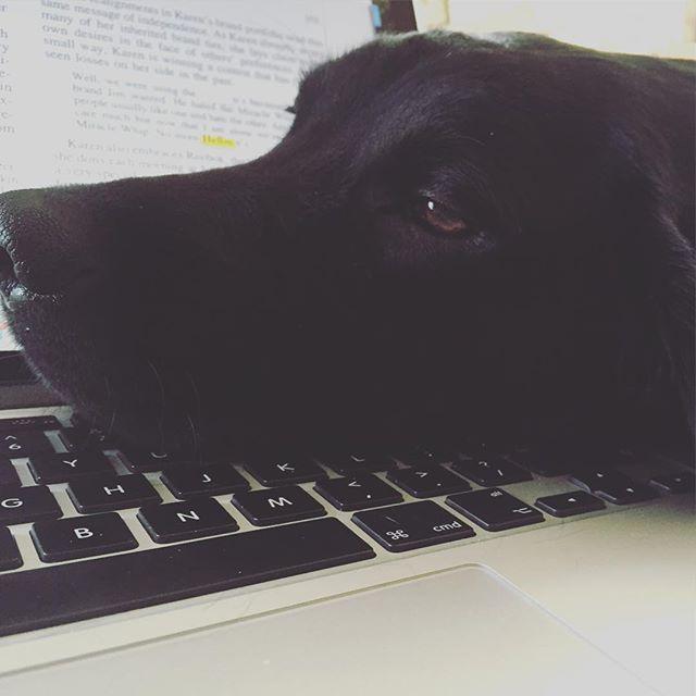 Woofland - Γουφαμάρες - Αστείες φωτογραφίες σκύλων - Όταν ο σκύλος δεν μας αφήνει να δουλέψουμε 4