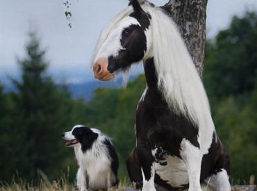 Γουφαμάρες – Αστείες φωτογραφίες σκύλων με τους σωσίες τους