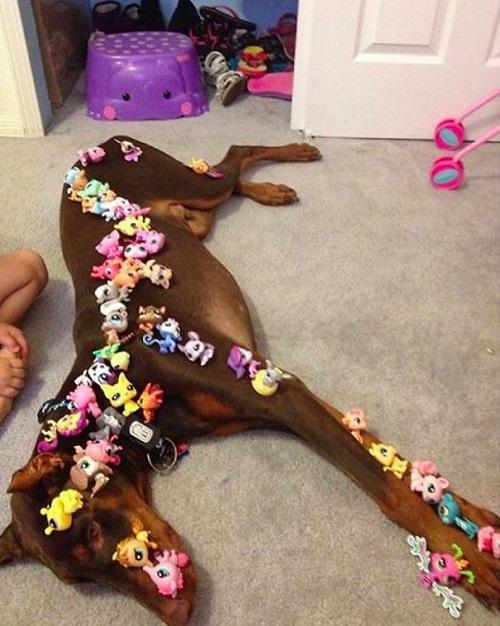Woofland - Γουφαμάρες - Αστείες φωτογραφίες σκύλων - Μην αφήνετε τα παιδιά μόνα με το σκύλο2