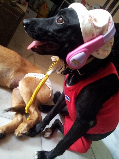 Woofland - Γουφαμάρες - Αστείες φωτογραφίες σκύλων - Μην αφήνετε τα παιδιά μόνα με το σκύλο3