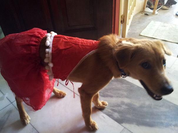 Woofland - Γουφαμάρες - Αστείες φωτογραφίες σκύλων - Μην αφήνετε τα παιδιά μόνα με το σκύλο4