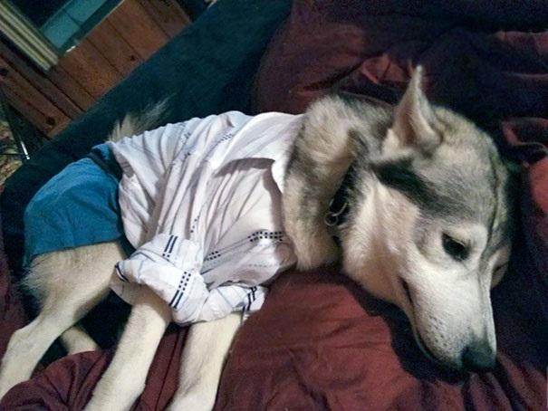 Woofland - Γουφαμάρες - Αστείες φωτογραφίες σκύλων - Μην αφήνετε τα παιδιά μόνα με το σκύλο6