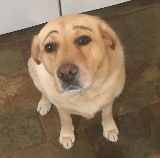 Woofland - Γουφαμάρες - Αστείες φωτογραφίες σκύλων - Μην αφήνετε τα παιδιά μόνα με το σκύλο9