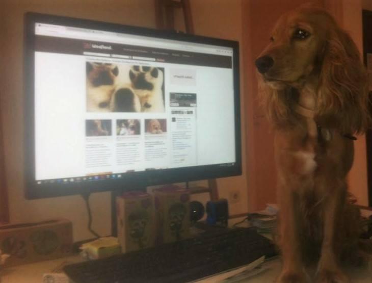 Woofland - Γουφαμάρες - Αστείες φωτογραφίες σκύλων - Όταν ο σκύλος δεν μας αφήνει να δουλέψουμε 7