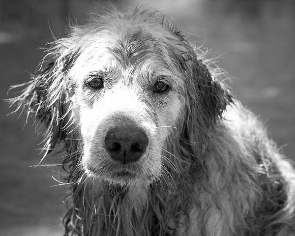 Woofland - Γουφαμέρες - Αστείες φωτογραφίες σκύλων στη βροχή 1
