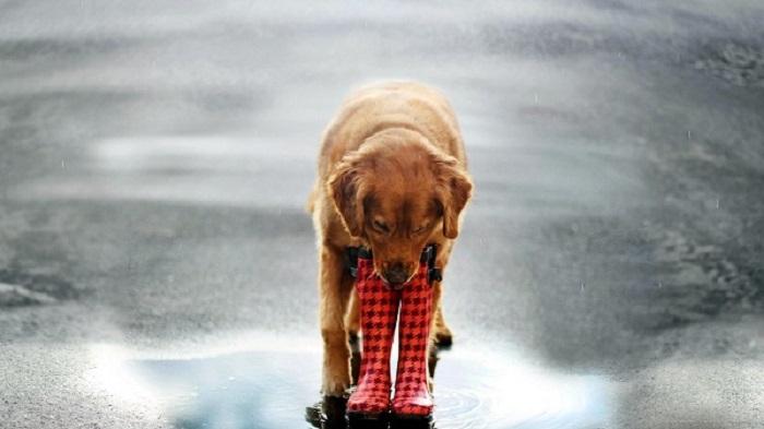 Αστείες φωτογραφίες σκύλων στη βροχή – Γουφαμάρες – Woofland