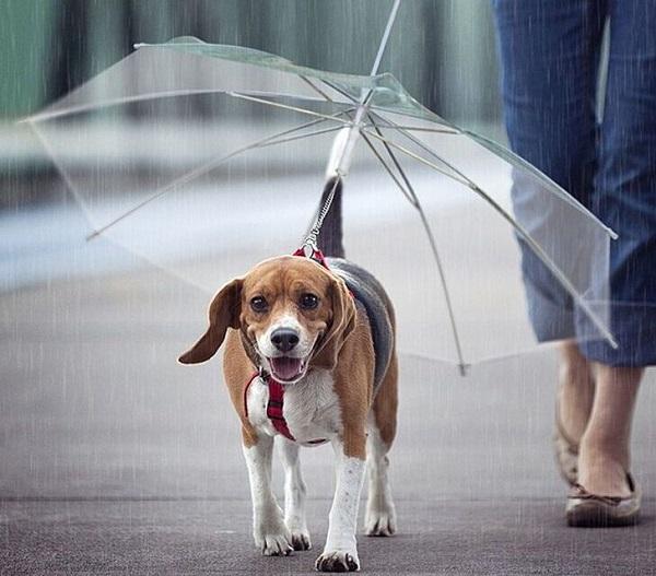 Woofland - Γουφαμέρες - Αστείες φωτογραφίες σκύλων στη βροχή 3