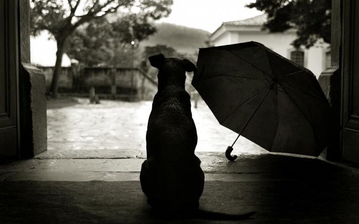 Woofland - Γουφαμέρες - Αστείες φωτογραφίες σκύλων στη βροχή 4