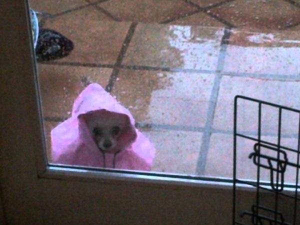Woofland - Γουφαμέρες - Αστείες φωτογραφίες σκύλων στη βροχή 5