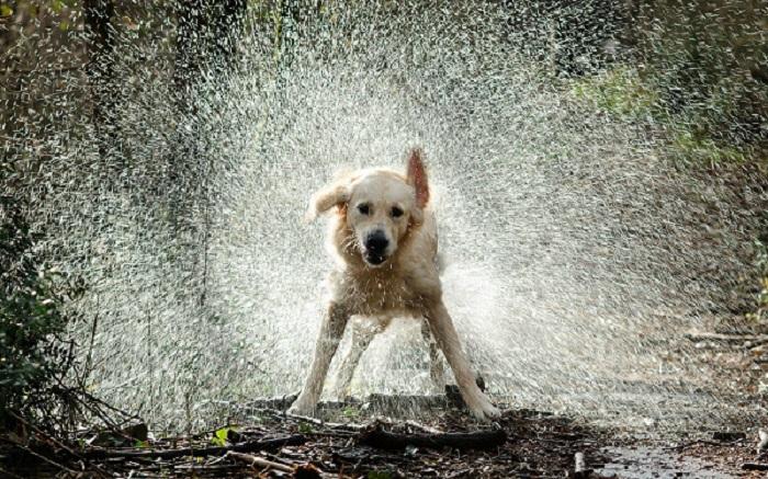 Woofland - Γουφαμέρες - Αστείες φωτογραφίες σκύλων στη βροχή 8