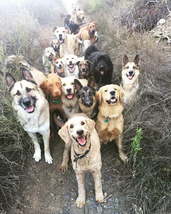 Διαφορετικές φυλές σκύλων έχουν διαφορές στον εγκέφαλο