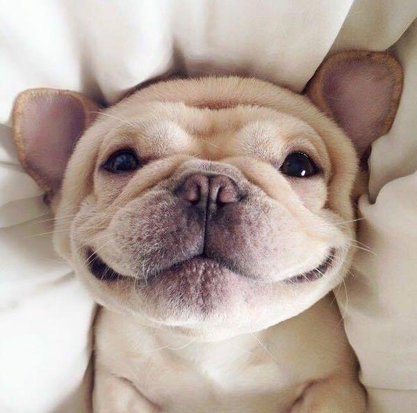 Είναι ο σκύλος μου ευτυχισμένος – Επιστήμη και ενημέρωση