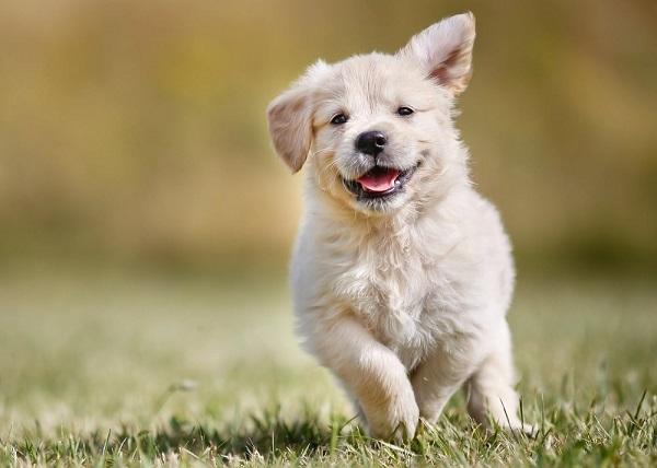 Woofland - Είναι ο σκύλος μου ευτυχισμένος - Επιστήμη και ενημέρωση
