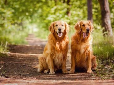 Είναι τα θηλυκά σκυλιά εξυπνότερα από τα αρσενικά – Woofland