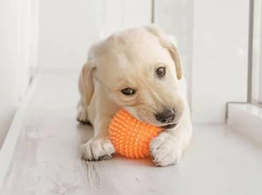 Επικίνδυνα παιχνίδια για το σκύλο μου – Woofland