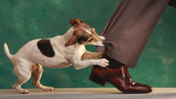 Γιατί κάποιοι άνθρωποι είναι πιθανότερο τους δαγκώσει σκύλος