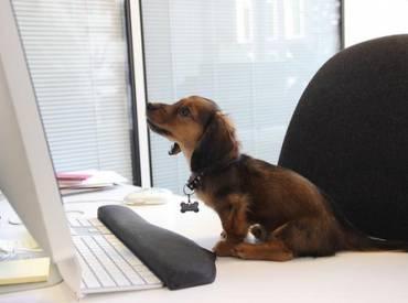 Εργαζόμενοι σκύλοι – Γουφαμάρες – Woolfand