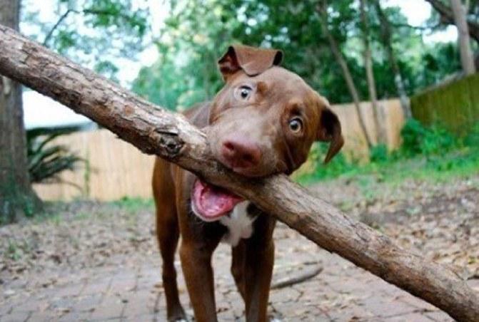 Woofland - Εργαζόμενοι σκύλοι - Γουφαμάρες 2