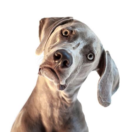 Βίντεο: Θέλω ο σκύλος μου να με ακούει – Εκπαίδευση σκύλου