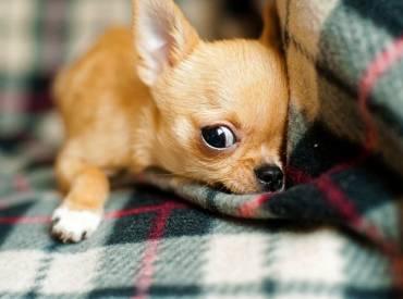 Ιστορίες για σκύλους και φουντωτές ουρές Με λένε Γκαστόν 109