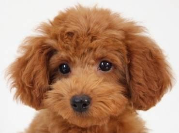 Ιστορίες για σκύλους και φουντωτές ουρές Με λένε Γκαστόν 110