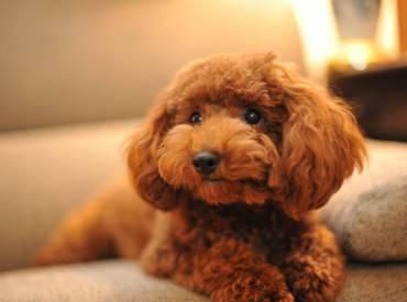 Ιστορίες για σκύλους και φουντωτές ουρές Με λένε Γκαστόν 112