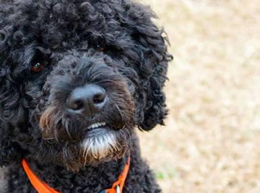 Ιστορίες για σκύλους και φουντωτές ουρές Με λένε Γκαστόν 108