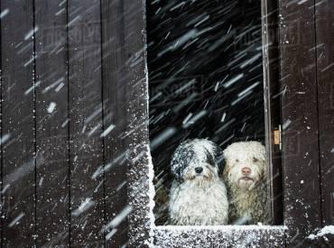 Ιστορίες για σκύλους Με λένε Γκαστόν 118 Woofland