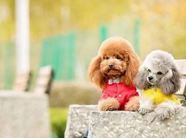 Ιστορίες για σκύλους Με λένε Γκαστόν 120 – Woofland
