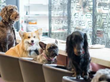 Ιστορίες για σκύλους Με λένε Γκαστόν 122 – Woofland