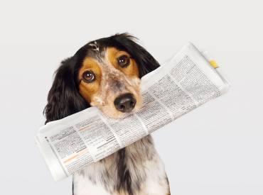 Ιστορίες για σκύλους – Με λένε Γκαστόν 116 – Woofland