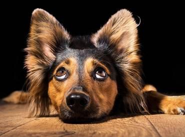 Καταλαβαίνει ο σκύλος μου τους «κακούς» ανθρώπους Woofland