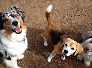 Βίντεο: Κοινωνικοποίηση σκύλου – Εκπαίδευση σκύλου Woofland