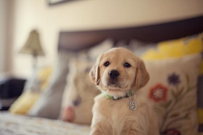 Κουτάβι στο σπίτι -Τι πρέπει να κάνω – Άνθρωπος και σκύλος