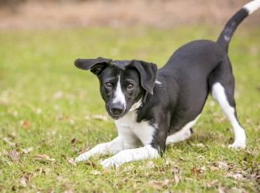 Βίντεο: Μαθαίνω στον σκύλο μου την υπόκλιση – Bow Play