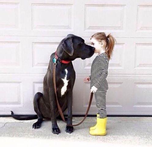 Woofland - Να πάρω σκύλο (στο παιδί μου); Άνθρωπος και σκύλος