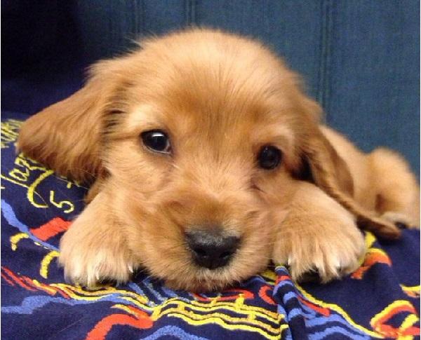 Woofland - Οι σκύλοι μας χειραγωγούν με τα μάτια τους - Επιστήμη και ενημέρωση