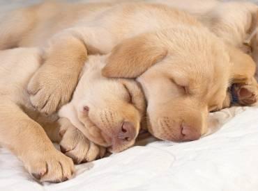 Ονειρεύονται οι σκύλοι – Επιστήμη και ενημέρωση – Woofland