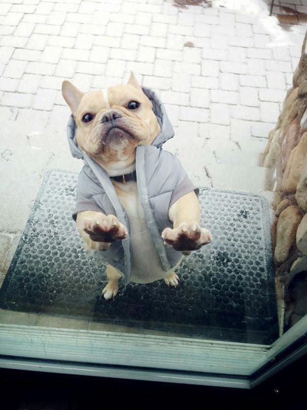 Woofland - Ο σκύλος μου θέλει να μπει μέσα στο σπίτι - Γουφαμάρες - Αστείες φωτογραφίες σκύλων 10