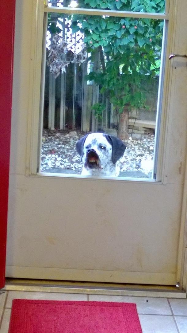 Woofland - Ο σκύλος μου θέλει να μπει μέσα στο σπίτι - Γουφαμάρες - Αστείες φωτογραφίες σκύλων11