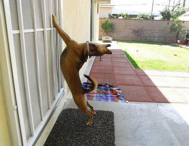 Woofland - Ο σκύλος μου θέλει να μπει μέσα στο σπίτι - Γουφαμάρες - Αστείες φωτογραφίες σκύλων 3