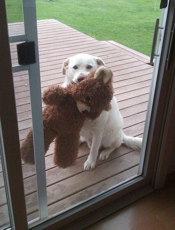 Woofland - Ο σκύλος μου θέλει να μπει μέσα στο σπίτι - Γουφαμάρες - Αστείες φωτογραφίες σκύλων 5