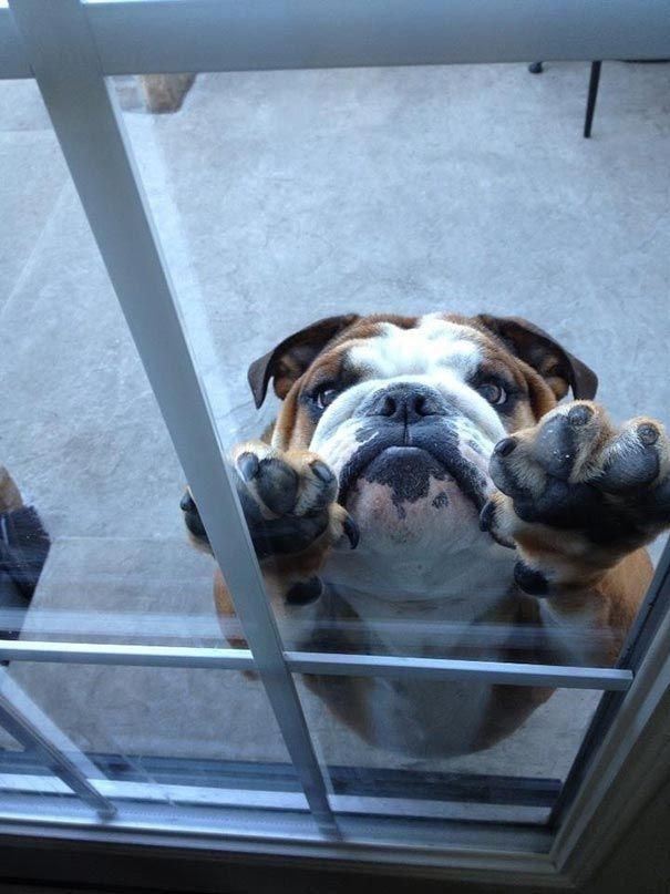 Woofland - Ο σκύλος μου θέλει να μπει μέσα στο σπίτι - Γουφαμάρες - Αστείες φωτογραφίες σκύλων 6