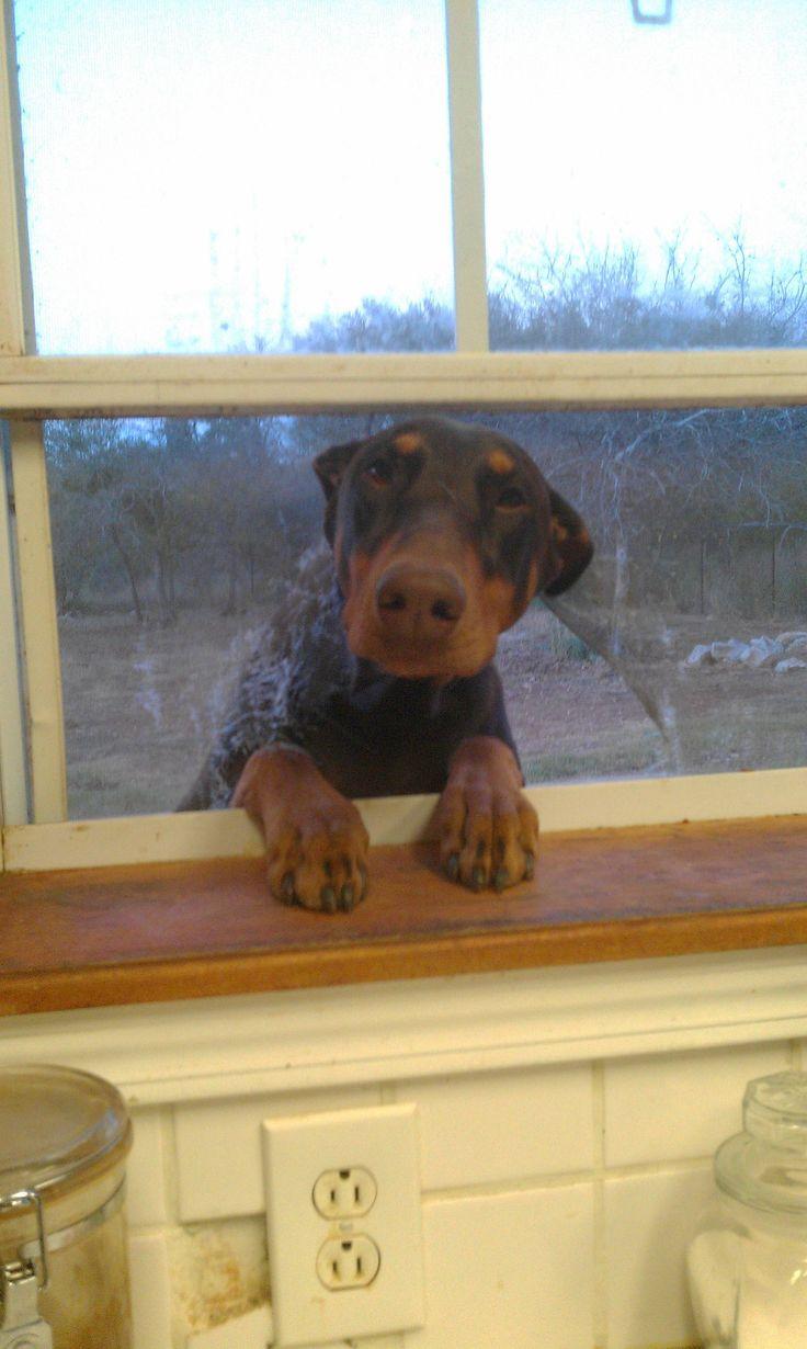 Woofland - Ο σκύλος μου θέλει να μπει μέσα στο σπίτι - Γουφαμάρες - Αστείες φωτογραφίες σκύλων 9
