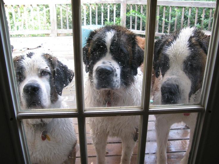 Woofland - Ο σκύλος μου θέλει να μπει μέσα στο σπίτι - Γουφαμάρες - Αστείες φωτογραφίες σκύλων1